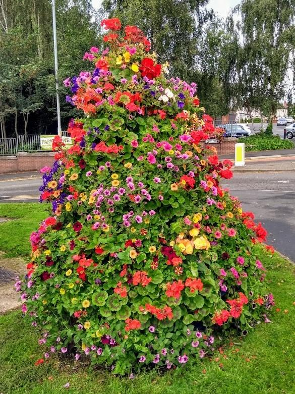 Halesowen News: A floral display on the island by Park Road in Quarry Bank