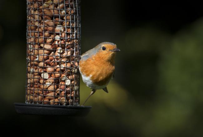 Position your feeders in a relatively open area away from predators – the birds will feel safer and visit more