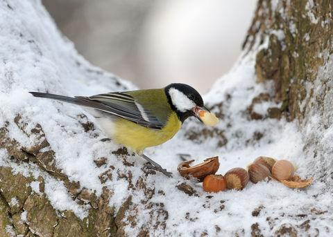Seeds of survival for birds