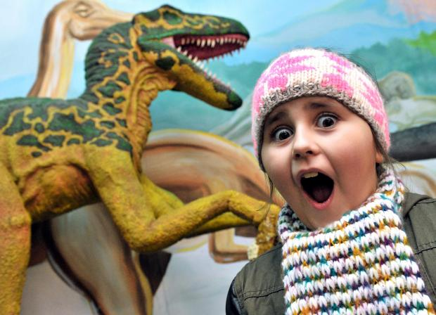 Demi Fieldhouse, aged seven, gets up close to one of the dinosaurs on display at Dudley Museum. Buy photo: 061412RS
