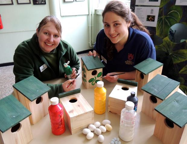 DZG birds section leader, Kellie Piper, and presenter, Pam Midwood, get to work decorating a bird box.