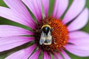 Protect our Pollinators