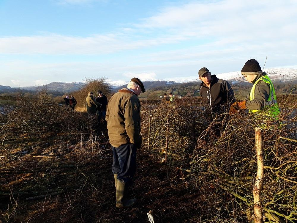 Young Farmers annual hedging match at Harewood End