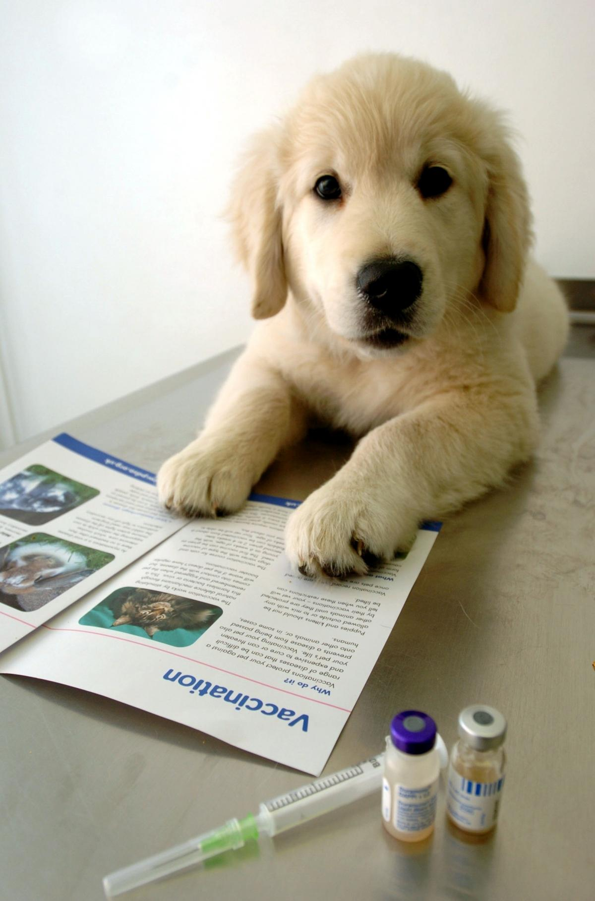 Quinton Animal Charity Offers Cut Price Vaccinations Halesowen News